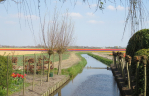 Stichting Greenport Duin- en Bollenstreek Duurzaam Verbonden