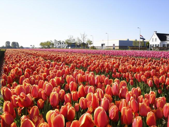 Greenport D&B herpakt zich na moeizaam voorjaar