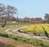 Bijenhotels & plantenpakketten voor een bloeiende Bollenstreek